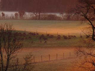 Hirsche schönes Licht