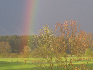 Hirsche mit Regenbogen